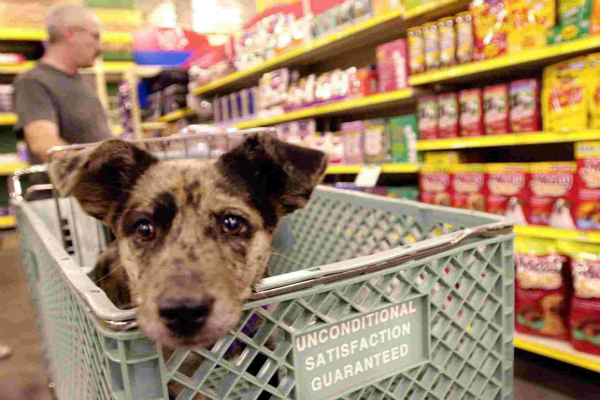 No Dogs in Shopping Carts – Publix Enforcing Service Pet Policies